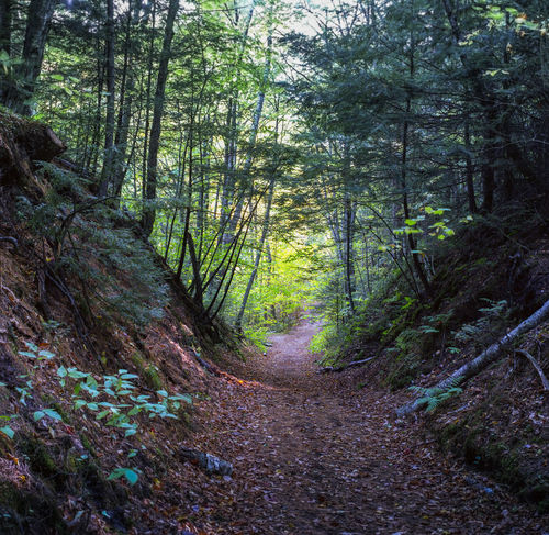 Wooded Path in Upper Peninsula of Michigan Nature Nature Trail Path Up North Up North Michigan Wooded Path Woods Film Photography