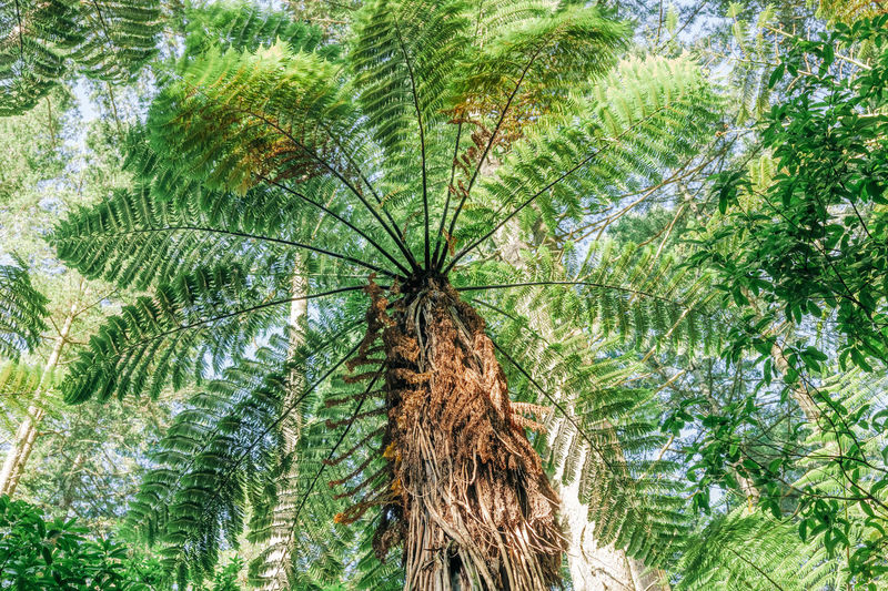 Low angle view of palm tree in forest