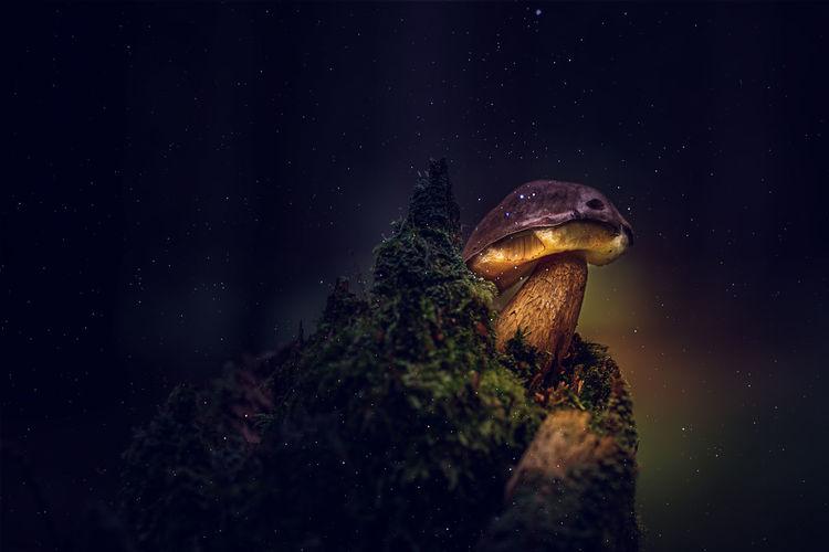 Stone mushroom at night