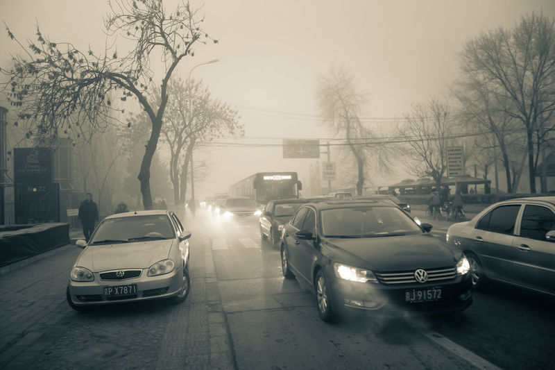 City Fog Car Police Force Tree Bare Tree