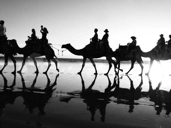 Animal Themes Camel Western Australia The Tourist Outdoors Side View Silhouette Standing Silhoutte Photography Sunset Silhouettes Working Animal Zoology Carpe Diem Bnw Showcase: January IPS2016Composition Reflected Glory Summer Views The Tourist Mission Travel Photography Traveling WesternAustralia