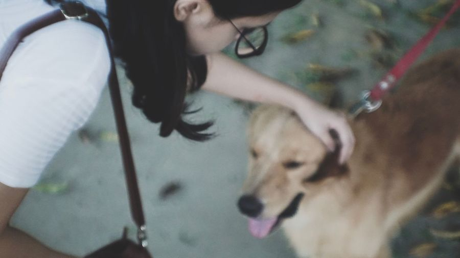 Midsection of woman with dog