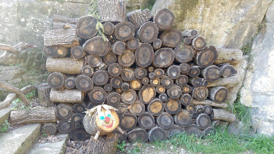 Firewood Backgrounds Nature Decoration Trunck Day Outdoors