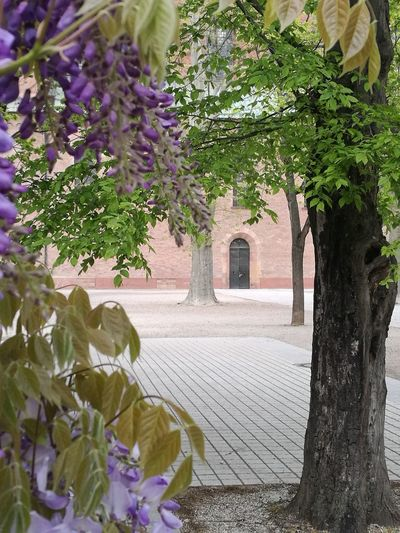 Speyer Tree Nature Beauty In Nature Plant Flower Leaf No People Outdoors City Tree