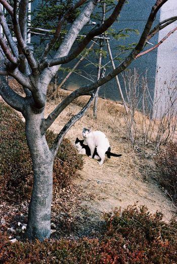 Better Together a love affair Cat♡ Love Kodak Portra 35mm Film Film Contax G2 Seoul Everyday Lives