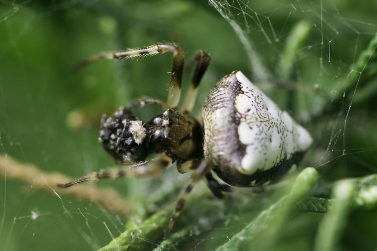 Selective Focus Close-up Spider Nature Spider Web Outdoors Macro Photography Spider