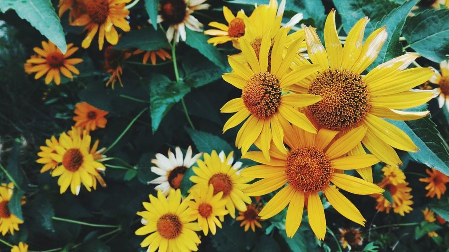 Nature Flora Flowers Yellow Flowers Contrast Yellow And Green Taking Photos Summer