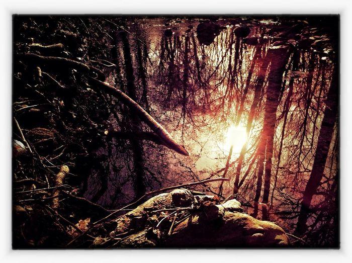 Nature at New York Nature