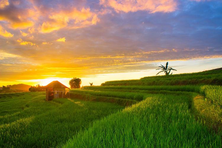 beauty sunset