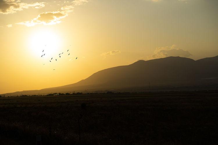 Silhouette of birds flying over landscape against sky during sunset