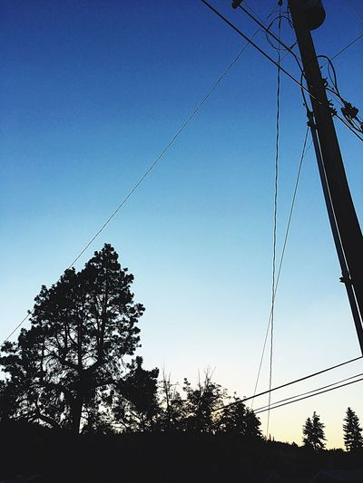Cable Tree Power Line  Low Angle View Silhouette Power Supply Electricity  Connection Clear Sky No People Sky Outdoors Telephone Line Electricity Pylon Fuel And Power Generation Blue Nature Day Technology Beauty In Nature