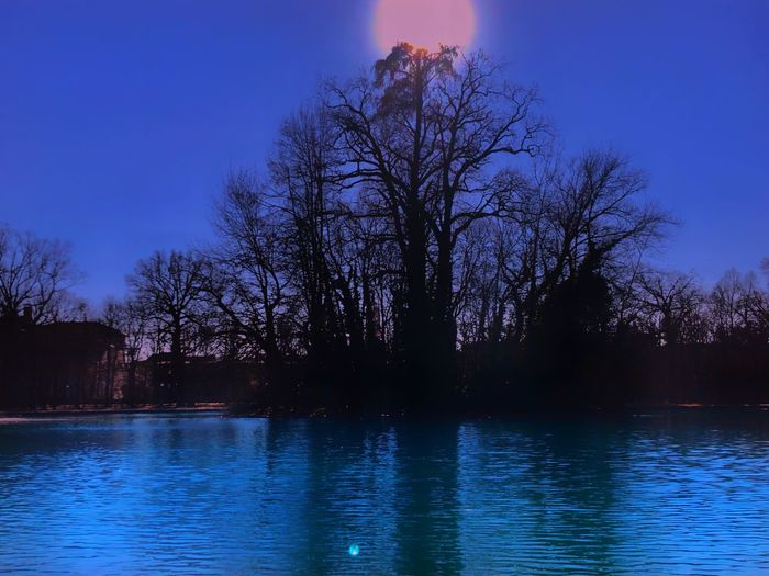 Tree Water Plant Tranquility Sky Beauty In Nature Tranquil Scene
