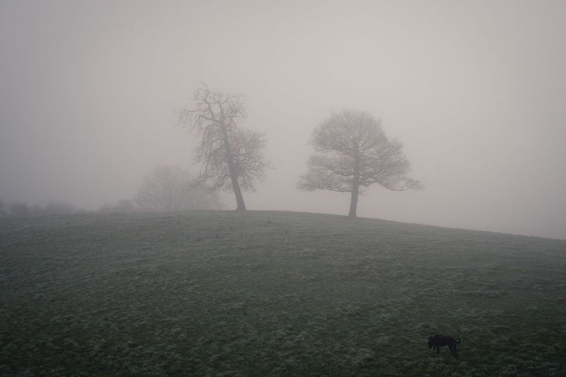 Foggy morning. Bare Tree Beauty In Nature Branch Day Fog Grass Hazy  Idyllic Landscape Nature No People Outdoors Sky Tranquil Scene Tranquility Tree