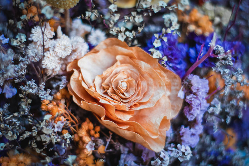 flower. Flower Head Flower Flowers Flowering Plant Flower Collection Flower Head Flower Water UnderSea Close-up Plant Toadstool