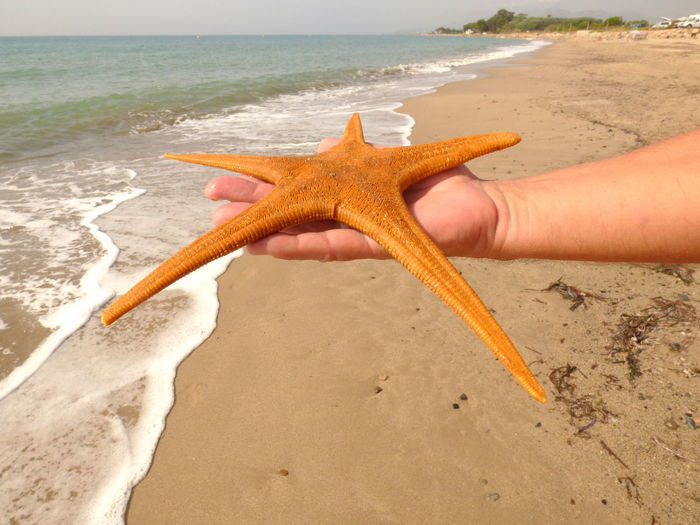 Animals In The Wild Asteroideo Beach Photography Day Echinoderm Nature Outdoors Starfish At Beach