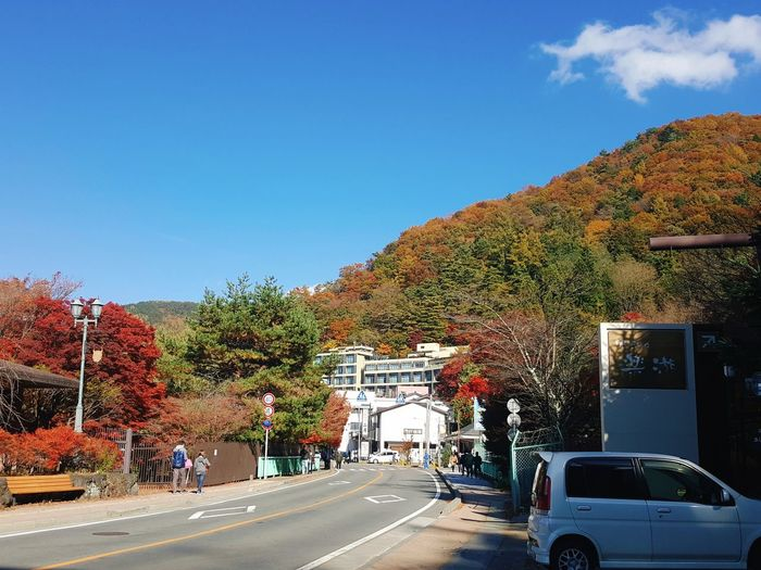 Japan autumn EyeEm Selects Tree Multi Colored Red Leaves🍂 Yellow Leaves Autumn Colors Japan Mountains Waiting For Nature Road Beautiful Countory Town Outdoors Car Japan Photography