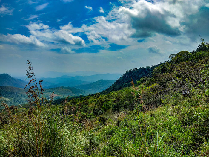 Hill life Nature Hill Cloud Cloudy Sky And Clouds Gateway ASIA Lanscape Sri Lanka Alone Tea Crop Tree Mountain Rural Scene Agriculture Beauty Sky Landscape Cloud - Sky Plant Terraced Field Plantation Valley Crop  EyeEmNewHere