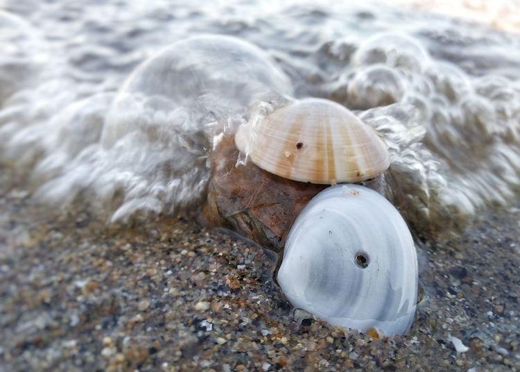 Shells shots Sea Life Sea Water UnderSea Beach Sand Seashell Jellyfish Close-up