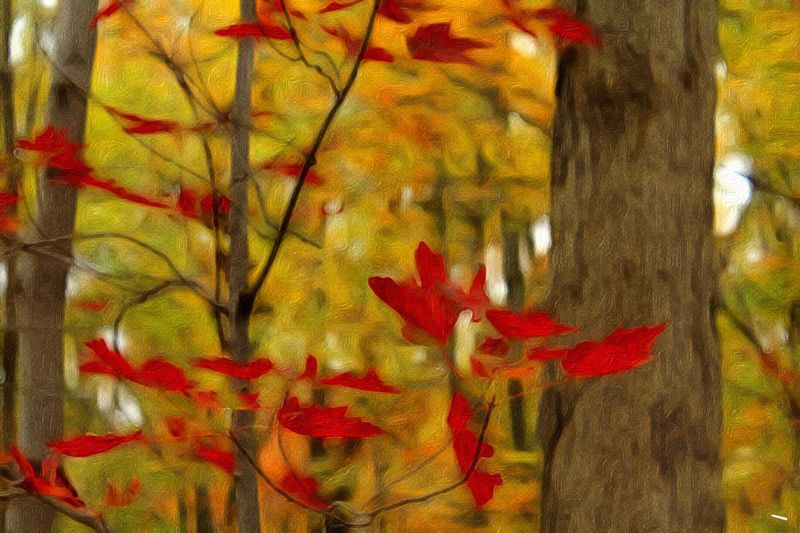 Beauty In Nature, Autumn Vibrant Color Abstract Paint Edit Photo Red And Gold
