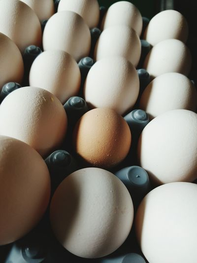 Being Different Egg Close-up Farm Life ✌ Shadows Chicken Egg Stand Out Stand Out From The Crowd Standing Outside The Box