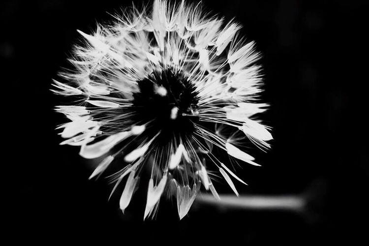 Hope. Flowers Taking Photos Follow Blackandwhite Hello World