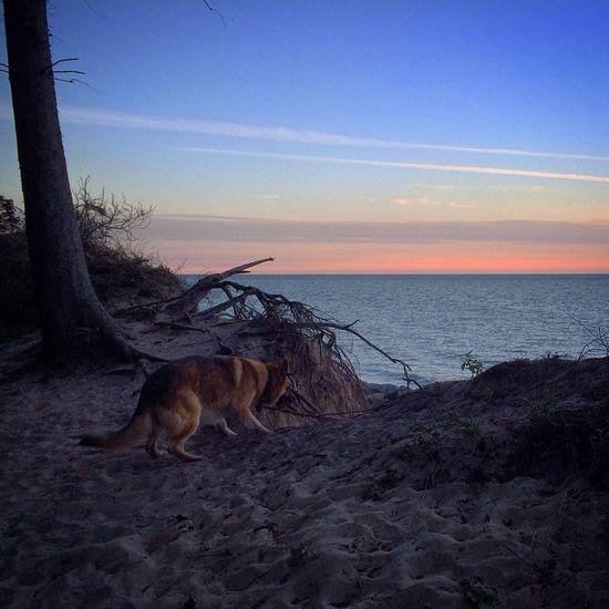 Taking Photos Enjoying Life Hello World Dog Beachphotography Sunset