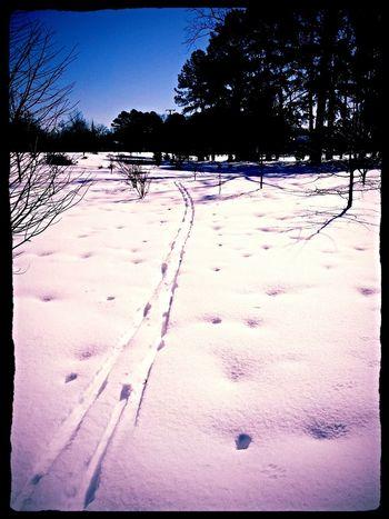 Path Winter Wonderland Find Me On Path Not Park Bench Thursday