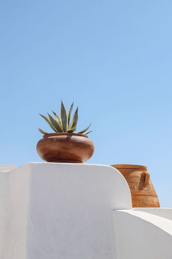 Low angle view of potted plant against clear blue sky