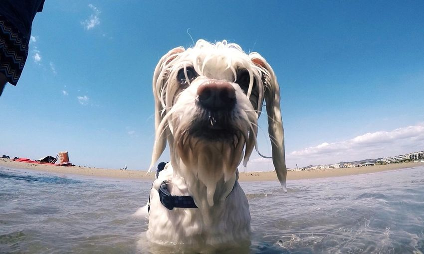 Close-Up Of White Dog In Sea Against Sky