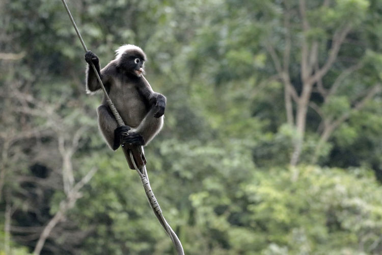 Monkey sitting on branch in forest