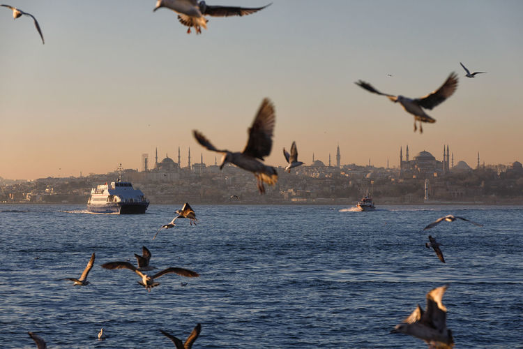 Seagull Istanbul Seaview Cityview Water Flying Animals In The Wild Bird Group Of Animals Animal Themes Vertebrate Animal Wildlife Animal Sky Sea Spread Wings Mid-air Waterfront Nature Sunset Beauty In Nature No People Scenics - Nature Outdoors Flock Of Birds