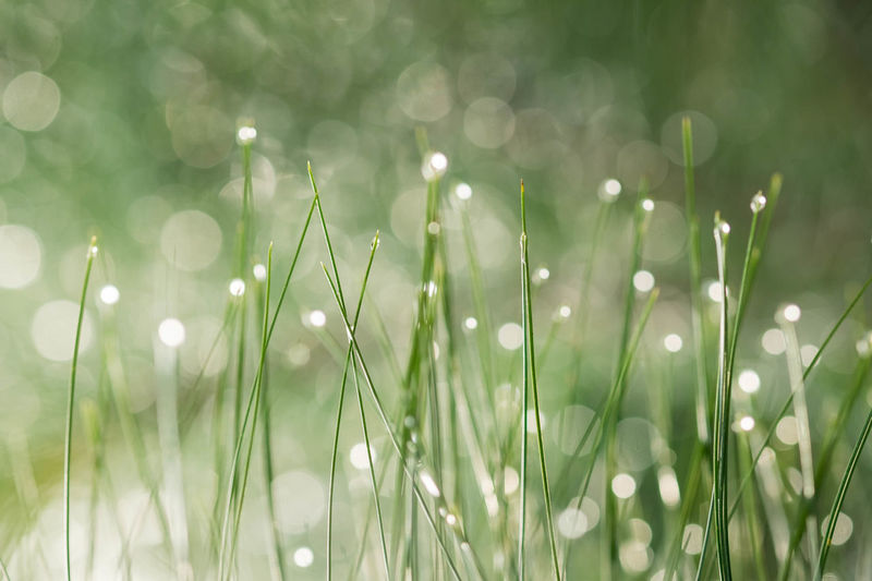 Defocused image of grass