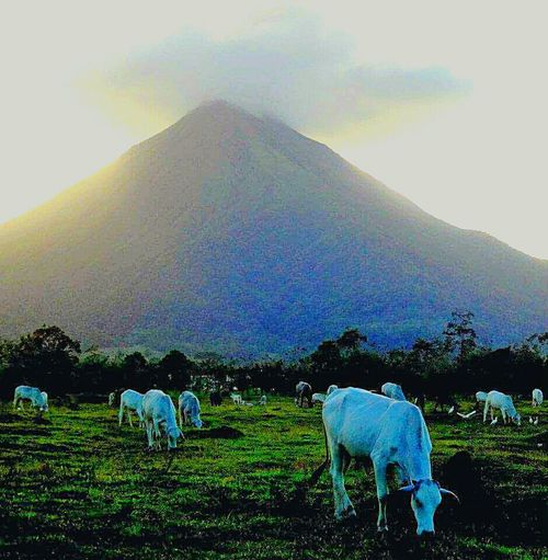 Volcanoes Costa Rica Travelingtheworld  Besteyeemtravel Streetphotography EyeEm Best Edits EyeEm Best Shots Photooftheday Eye4photography  Bestoftheday Travel Photography