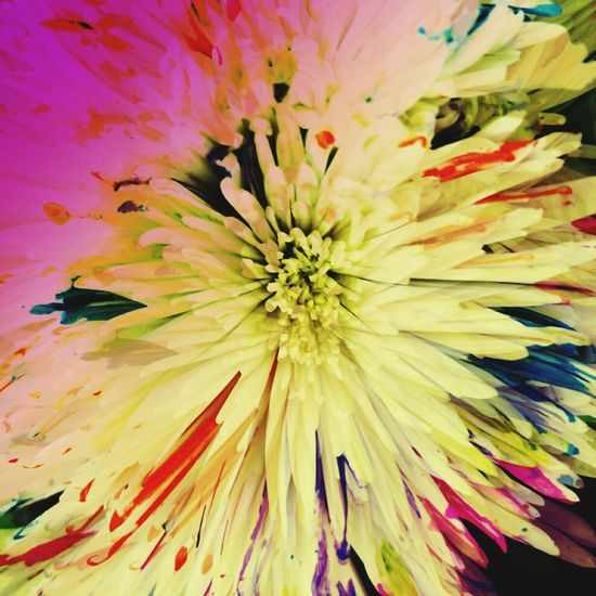 Artistic Photo Feeling Artsy Artsy Photography Nature Edits Flowers, Nature And Beauty Flowerlovers Flower Photography Flower Porn Flower Collection No Edit No Fun Bright Colors