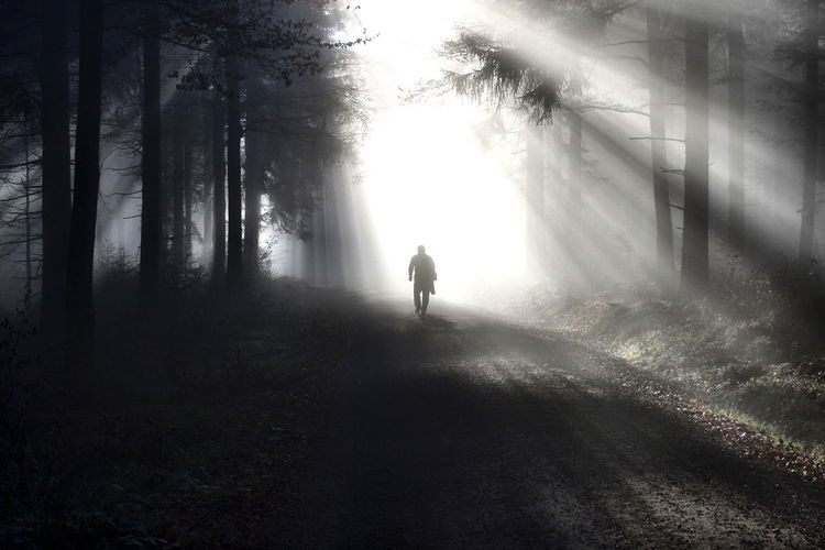 Silhouette person walking on road in forest
