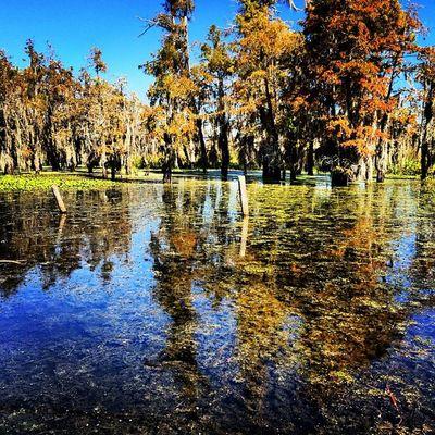 Reflection Nature Trees Vacant Blue Outdoors Rural Clear Overgrown Louisiana Bayou Bluesky South Swamp Algae Wetlands Gulfcoast Deepsouth Oldsouth Onlylouisiana Louisianatravel Jj_louisiana_039 Rebels_t