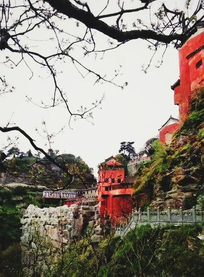 武当山 Wudangshan Mountain Outdoors Day Tree PhonePhotography Daytime Traveling Boring China