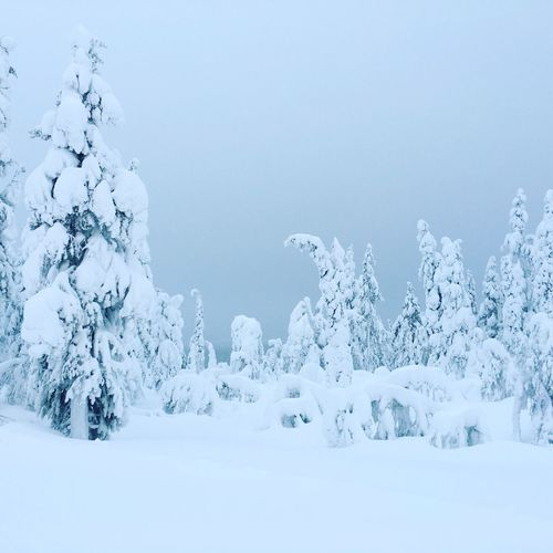 Frozen trees on snowcapped field during winter