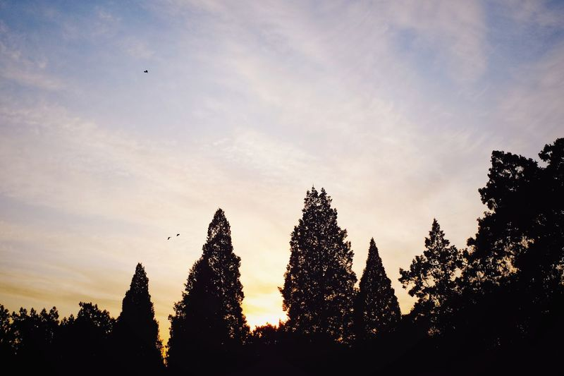 Silhouette Sunset Outdoors Tree Growth Nature Beauty In Nature Sky Day Warm Winter Sunlight Warm Colors Travel Warm Day Cloud - Sky FUJIFILM X-T10 Light And Shadow Beijing, China Temple Of Heaven Park Palace Royalty City Warm Light Low Angle View Nature