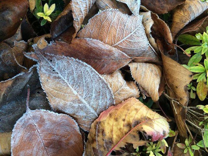 秋 落ち葉 自然 Nature Autumn Frost