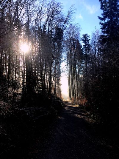 Durchgang - vom Schatten ins Licht From Shadows To Light Wanderweg Tree Forest Tranquility Nature Tranquil Scene Sunlight Sky No People Beauty In Nature Outdoors Scenics Sun Day Landscape Bare Tree Tree Trunk Branch