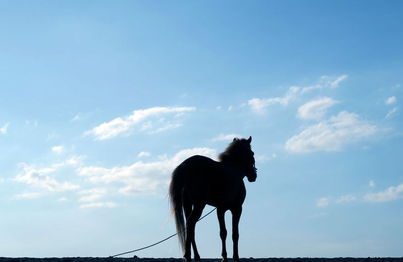 Silhouette of a horse standing against sky