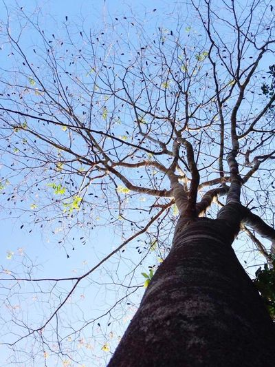 ต้นไม้ ข้างบ้าน ฉัน