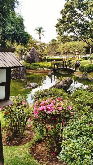 Garden Japonesegarden Flowers Beautiful Nature Beautiful Day Relaxing Enjoying Life Openyourmind