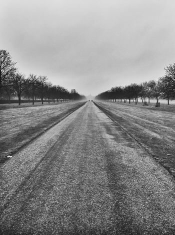 Black And White Diminishing Perspective Endless Road Long Walk The Way Forward Windsor Great Park
