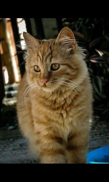 Cat Goodnight✌ People !!!! Cute Pets