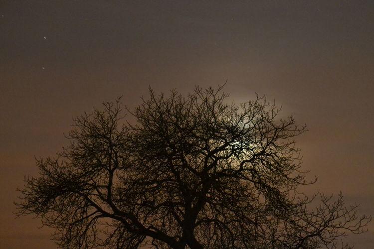 EyeEmNewHere Moon Tranquility Tree Long Exposure Night Nightsky Sky Trail Lights