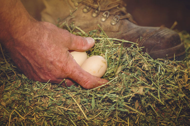 Collecting the Eggs Boot Collecting Cropped Day Eggs Focus On Foreground Grass Hand Human Finger Lifestyles Nature Part Of Person Selective Focus Touching Unrecognizable Person