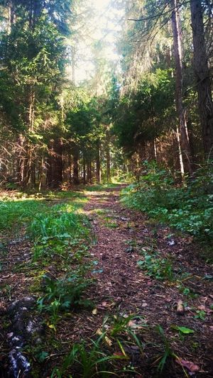 Forest Footpath