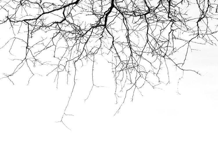 Nature #tree #garden #oak